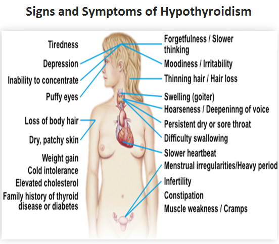 Educate Hypothyroidism