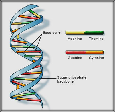 1-Image-Causes-DNA-HD